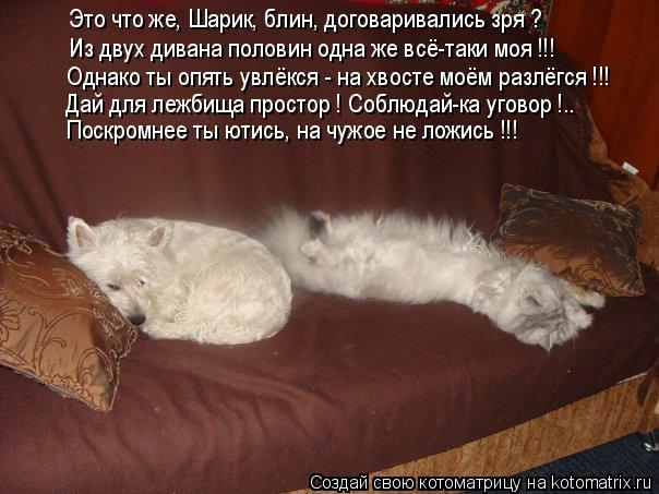 Котоматрица: Это что же, Шарик, блин, договаривались зря ? Из двух дивана половин одна же всё-таки моя !!! Однако ты опять увлёкся - на хвосте моём разлёгся !!
