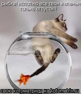 Котоматрица: рыбка! исполню все твои желанья!! только отпусти!!