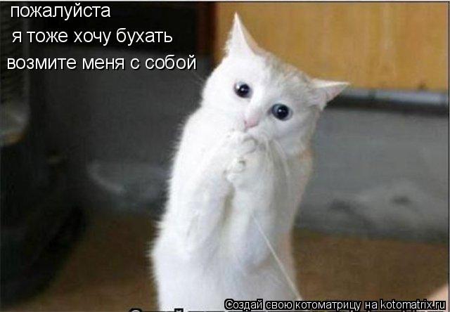 Котоматрица: пожалуйста  я тоже хочу бухать возмите меня с собой