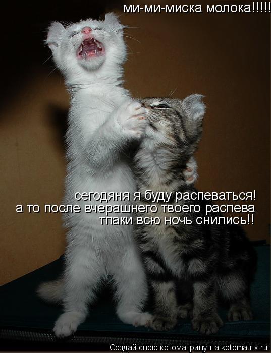 Котоматрица: ми-ми-миска молока!!!!! сегодяня я буду распеваться! а то после вчерашнего твоего распева тпаки всю ночь снились!!