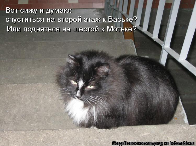 Котоматрица: Вот сижу и думаю: спуститься на второй этаж к Ваське? Или подняться на шестой к Мотьке?