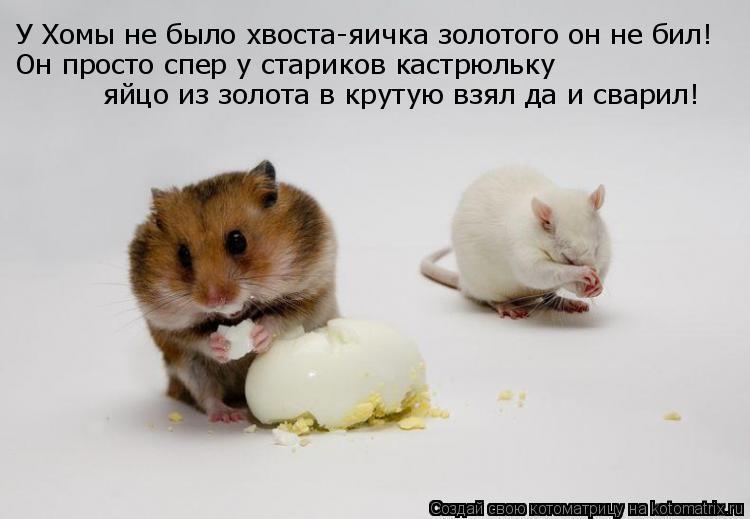 Котоматрица: У Хомы не было хвоста-яичка золотого он не бил! яйцо из золота в крутую взял да и сварил! Он просто спер у стариков кастрюльку