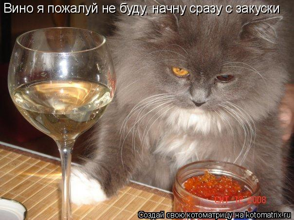 Котоматрица: Вино я пожалуй не буду, начну сразу с закуски