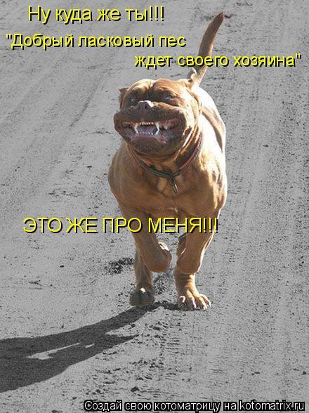 """Котоматрица: Ну куда же ты!!! """"Добрый ласковый пес  ждет своего хозяина"""" ЭТО ЖЕ ПРО МЕНЯ!!!"""