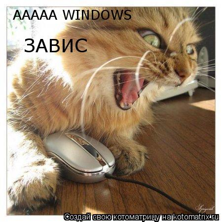 Котоматрица: ААААА WINDOWS  ЗАВИС