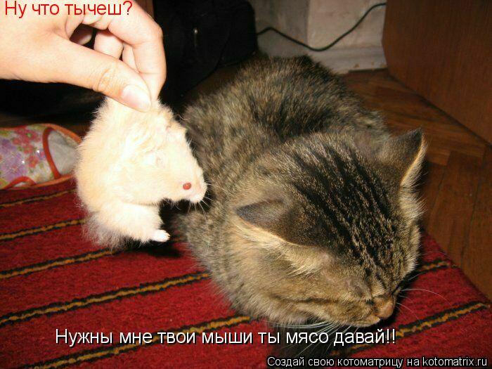Котоматрица: Ну что тычеш? Нужны мне твои мыши ты мясо давай!!