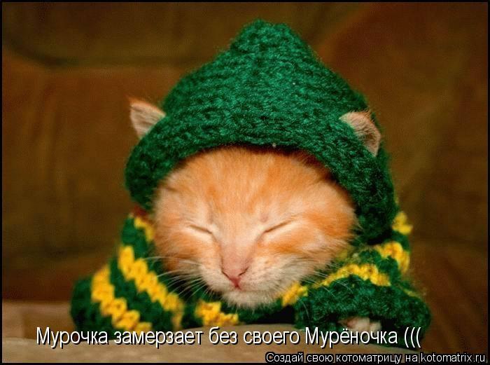 Котоматрица: Мурочка замерзает без своего Мурёночка (((