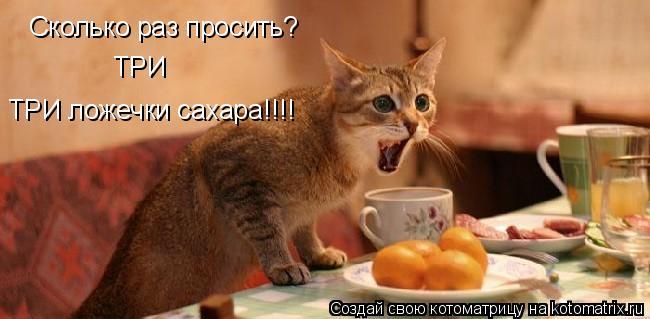 Котоматрица: Сколько раз просить? ТРИ ТРИ ложечки сахара!!!!