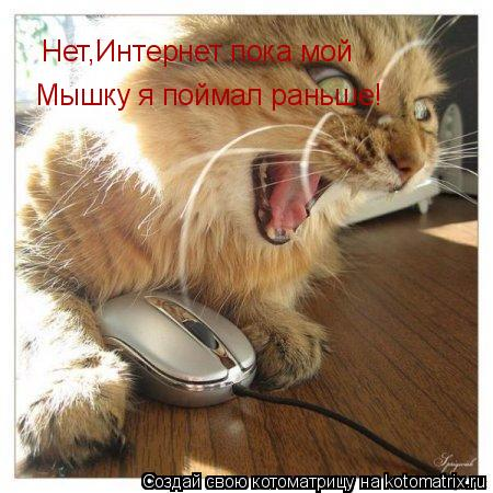 Котоматрица: Нет,Интернет пока мой Мышку я поймал раньше!