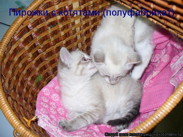 Котоматрица: Пирожки с котятами (полуфабрикат)