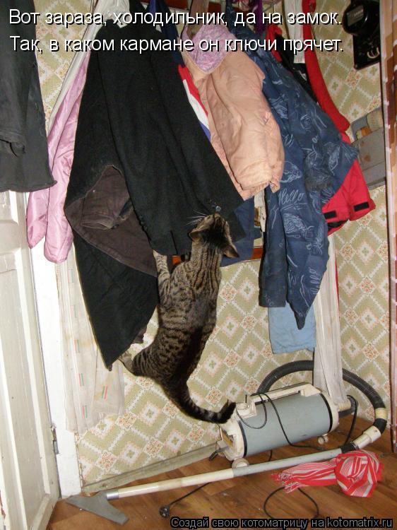 Котоматрица: Вот зараза, холодильник, да на замок. Так, в каком кармане он ключи прячет.