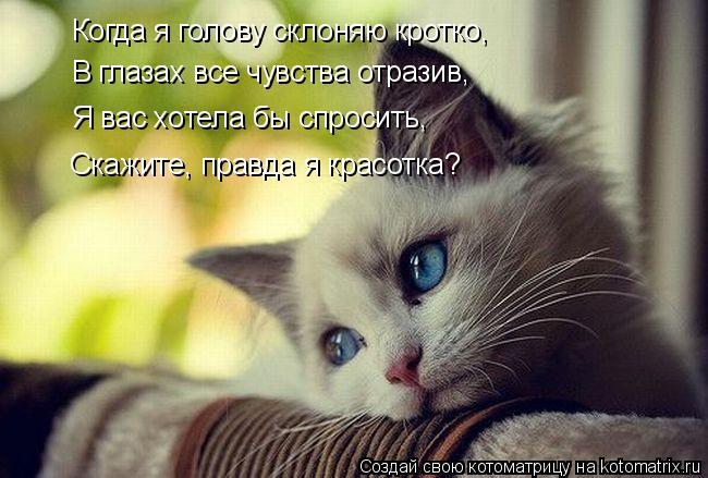 Котоматрица: Когда я голову склоняю кротко, В глазах все чувства отразив, Я вас хотела бы спросить, Скажите, правда я красотка?