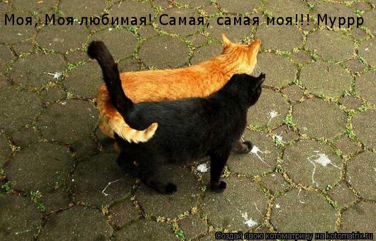 Котоматрица: Моя, Моя любимая! Самая, самая моя!!! Муррр