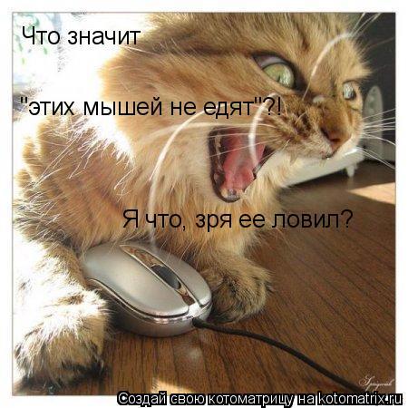 """Котоматрица: Что значит  """"этих мышей не едят""""?! Я что, зря ее ловил?"""