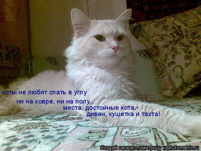 Котоматрица: коты не любят спать в углу ни на ковре, ни на полу... места, достойные кота,- диван, кушетка и тахта!