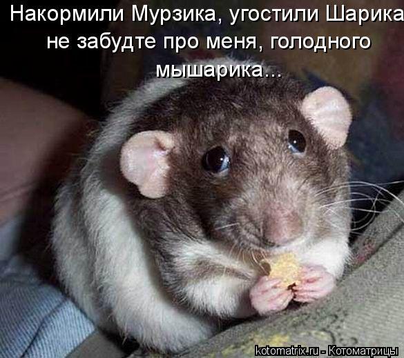 Котоматрица: Накормили Мурзика, угостили Шарика не забудте про меня, голодного  мышарика...