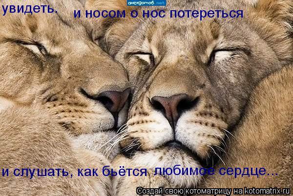 Котоматрица: увидеть. и носом о нос потереться и слушать, как бьётся любимое сердце...