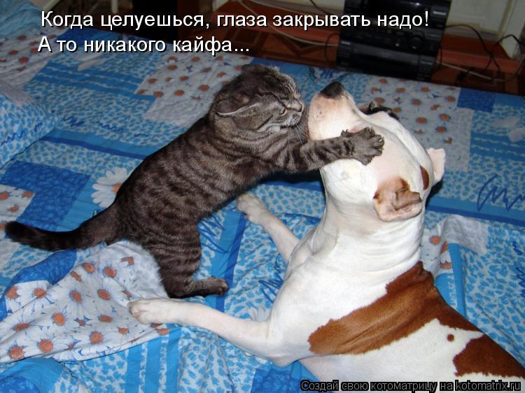 Котоматрица: Когда целуешься, глаза закрывать надо! А то никакого кайфа...