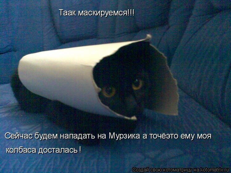 Котоматрица: Таак маскируемся!!! Сейчас будем нападать на Мурзика а точёэто ему моя колбаса досталась !