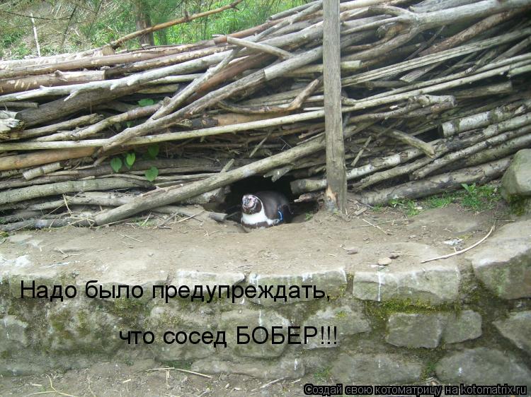 Котоматрица: Надо было предупреждать, что сосед БОБЕР!!!