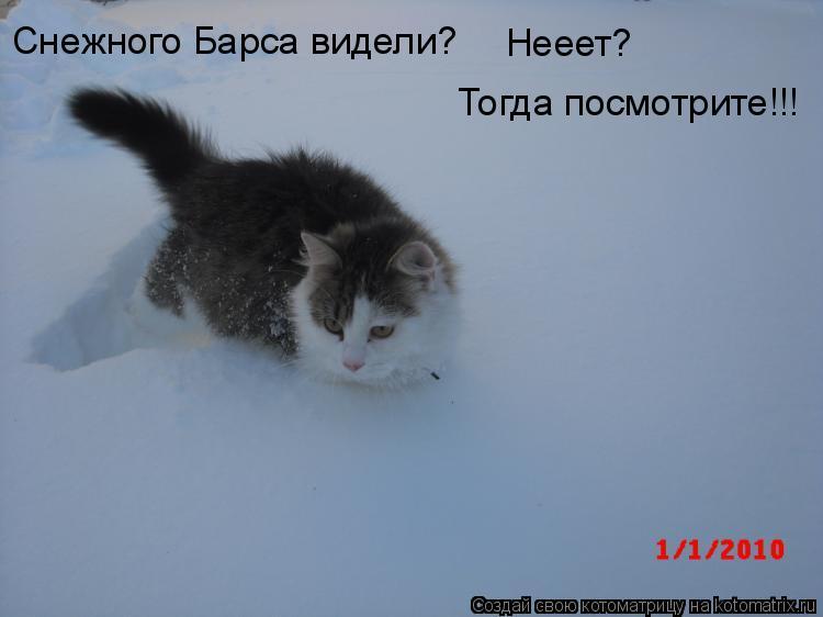 Котоматрица: Снежного Барса видели? Нееет? Тогда посмотрите!!!