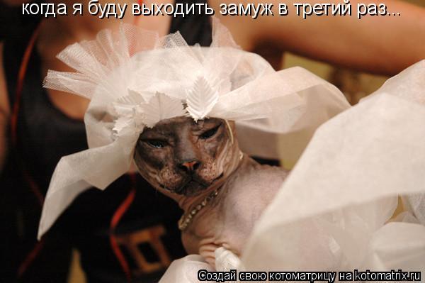 Котоматрица: когда я буду выходить замуж в третий раз...