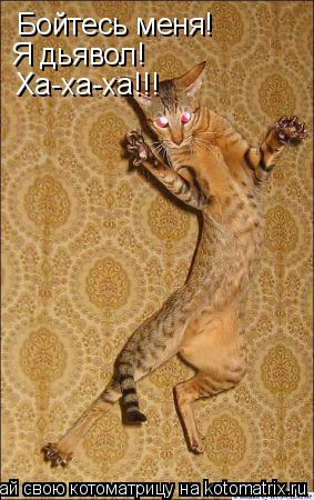 Котоматрица: Бойтесь меня! Я дьявол! Ха-ха-ха!!!