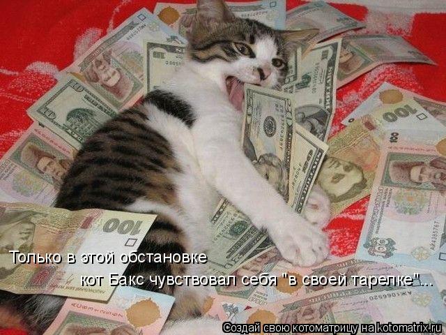 """Котоматрица: Только в этой обстановке  кот Бакс чувствовал себя """"в своей тарелке""""..."""