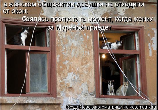 Котоматрица: в женском общежитии девушки не отходили от окон: боялись пропустить момент, когда жених  за Мурёной приедет.