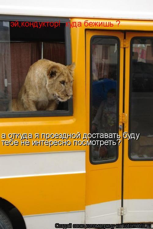Котоматрица: эй,кондуктор!  куда бежишь ? а откуда я проездной доставать буду  тебе не интересно посмотреть?
