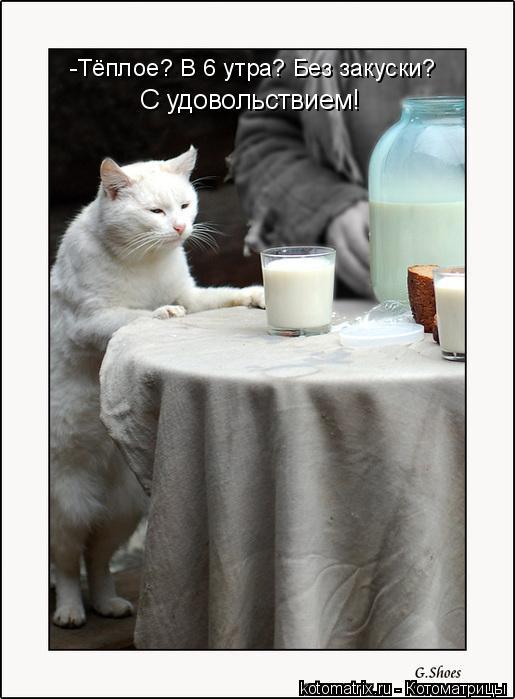 Котоматрица: -Тёплое? В 6 утра? Без закуски?  С удовольствием!