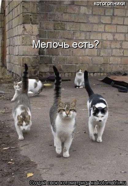 Котоматрица: Мелочь есть? котогопники
