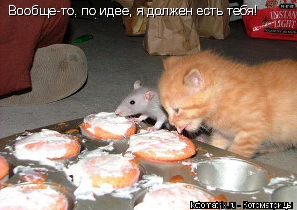 Котоматрица: Вообще-то, по идее, я должен есть тебя!