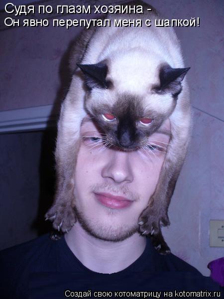 Котоматрица: Судя по глазм хозяина -  Он явно перепутал меня с шапкой!