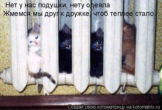 Котоматрица: Нет у нас подушки, нету одеяла Жмемся мы друг к дружке, чтоб теплее стало...