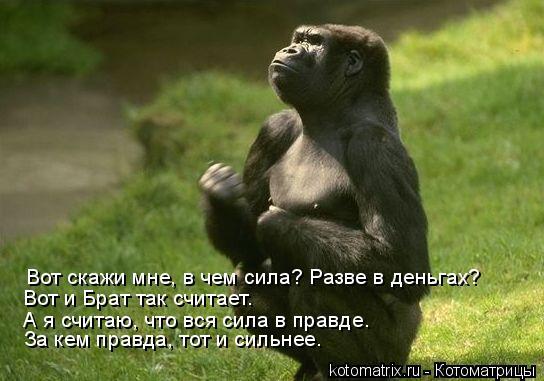 Котоматрица: Вот скажи мне, в чем сила? Разве в деньгах? Вот и Брат так считает.  А я считаю, что вся сила в правде. За кем правда, тот и сильнее.