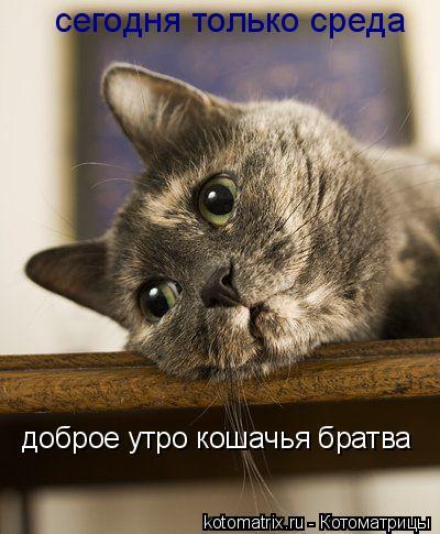 Котоматрица: сегодня только среда доброе утро кошачья братва