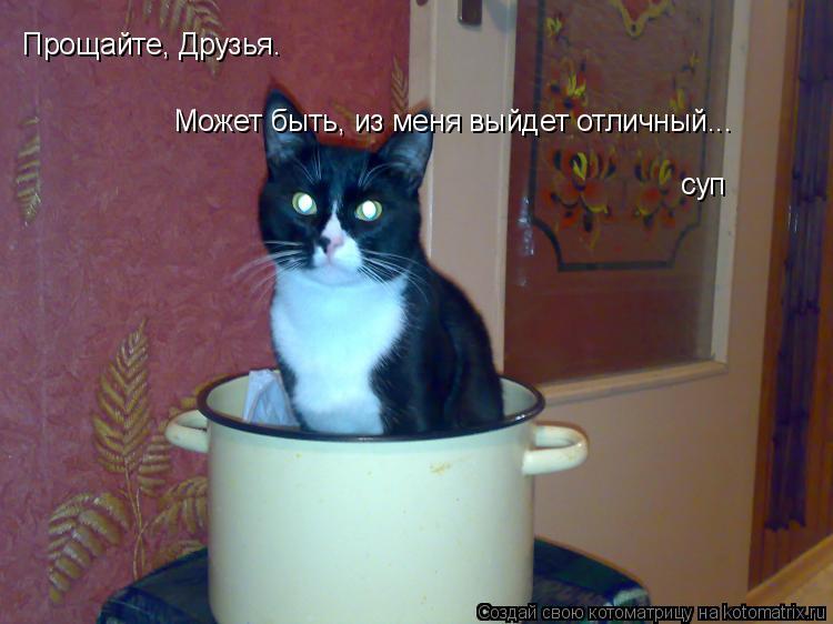 Котоматрица: Прощайте, Друзья. Может быть, из меня выйдет отличный... суп