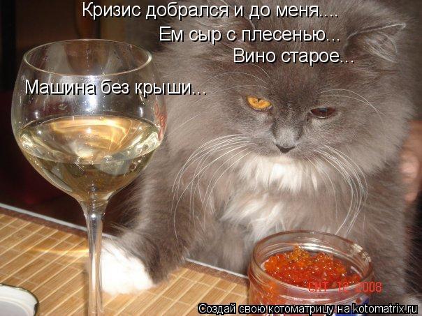 Котоматрица: Кризис добрался и до меня.... Ем сыр с плесенью... Вино старое... Машина без крыши...