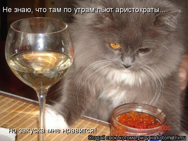 Котоматрица: Не знаю, что там по утрам пьют аристократы... но закуска мне нравится!