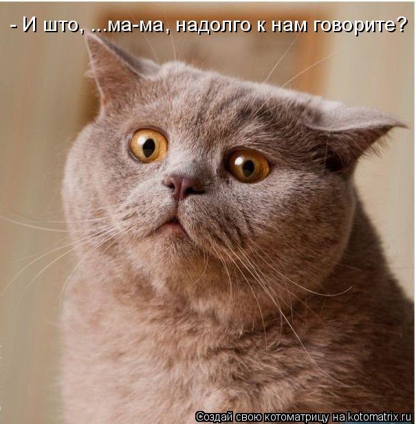 Котоматрица: - И што, ...ма-ма, надолго к нам говорите?