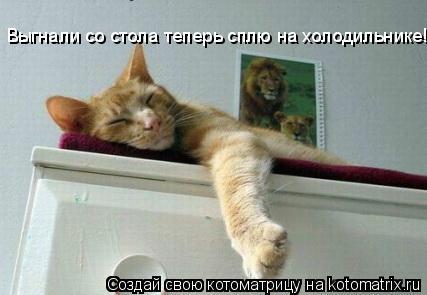 Котоматрица: Выгнали со стола теперь сплю на холодильнике!