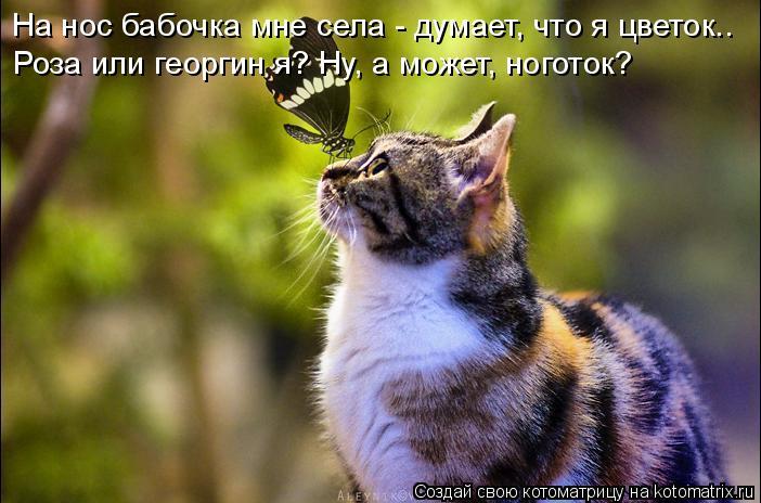 Котоматрица: На нос бабочка мне села - думает, что я цветок.. Роза или георгин я? Ну, а может, ноготок?