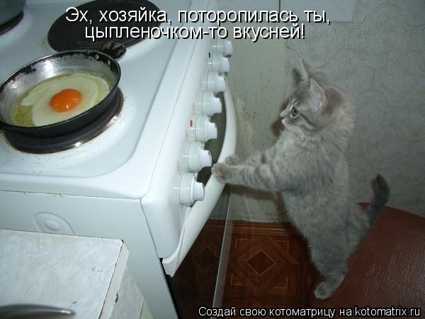 Котоматрица: Эх, хозяйка, поторопилась ты, цыпленочком-то вкусней!