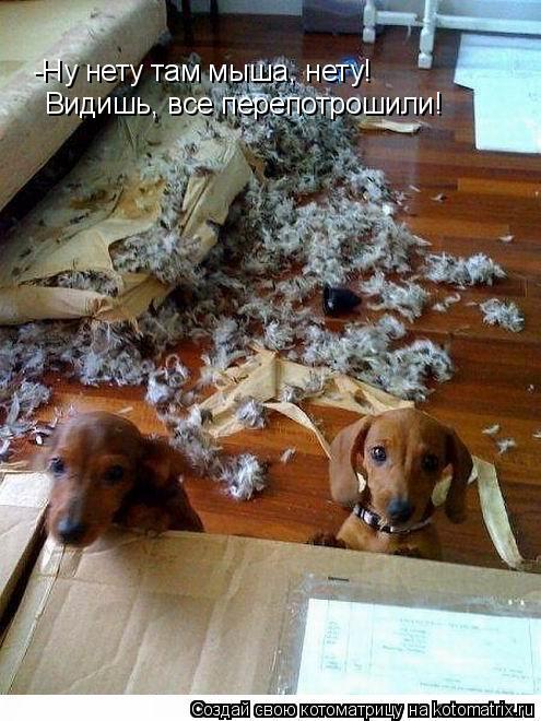 Котоматрица: -Ну нету там мыша, нету! Видишь, все перепотрошили!