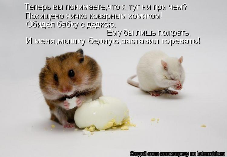 Котоматрица: Теперь вы понимаете,что я тут ни при чем? Похищено яичко коварным хомяком! Обидел бабку с дедкою. Ему бы лишь пожрать, И меня,мышку бедную,зас