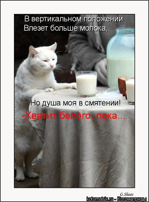 Котоматрица: В вертикальном положении Влезет больше молока, Но душа моя в смятении! -Хватит белого, пока...