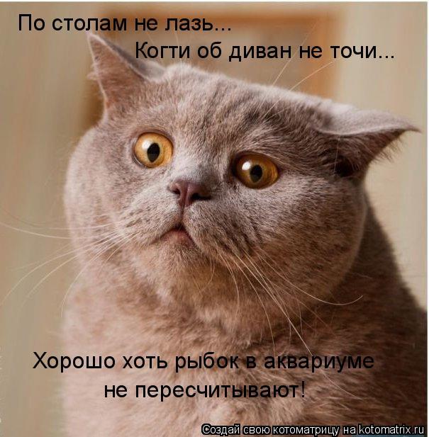 Котоматрица: По столам не лазь... Когти об диван не точи... Хорошо хоть рыбок в аквариуме не пересчитывают!
