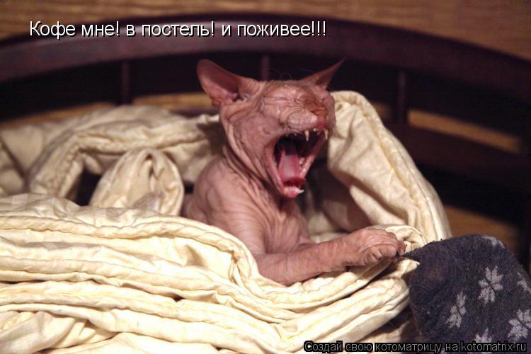 Котоматрица: Кофе мне! в постель! и поживее!!!