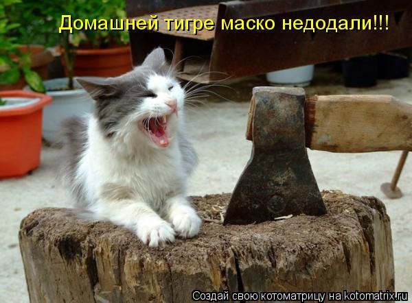 Котоматрица: Домашней тигре маско недодали!!!